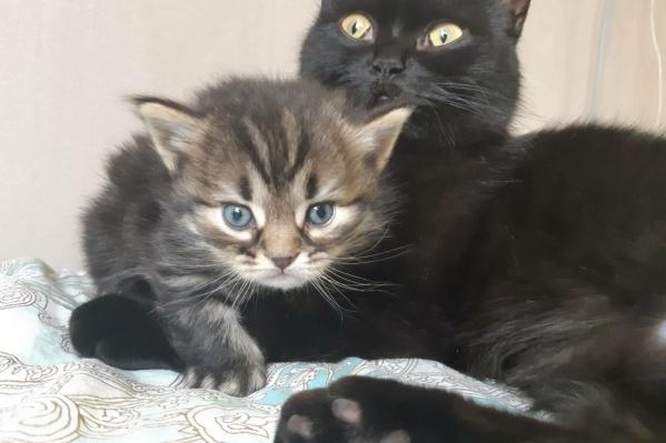 Здесь малыш со своей мамой