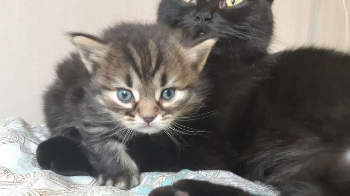 «Возможно, и Рысик покорит интернет»: хозяин звезды YouTube NONONONO Cat завел котенка