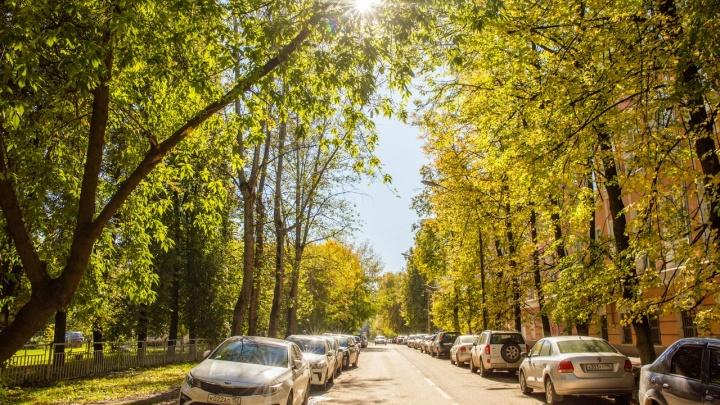 «Выше климата»: вЯрославль придёт очень тёплая осень