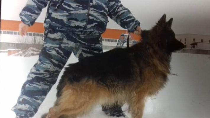 В Екатеринбурге ищут хозяев овчаркам-полицейским, уволенным со службы
