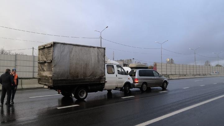 В Ярославском районе маленькая собачка стала виновником ДТП