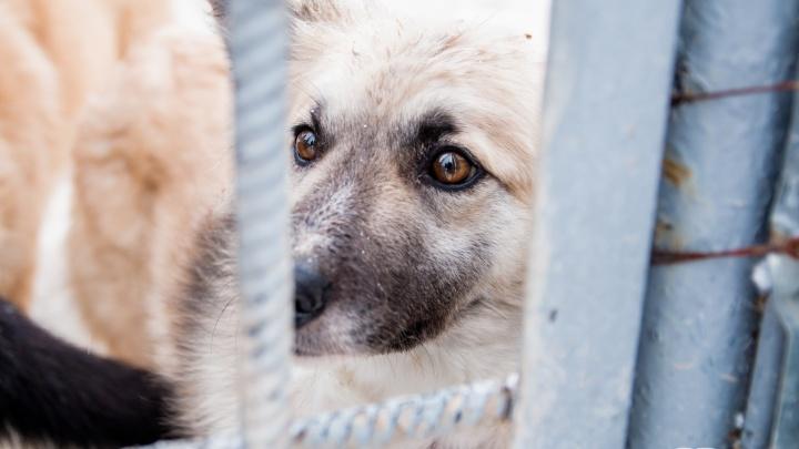 Города и районы Самарской области получат деньги на отлов бездомных животных