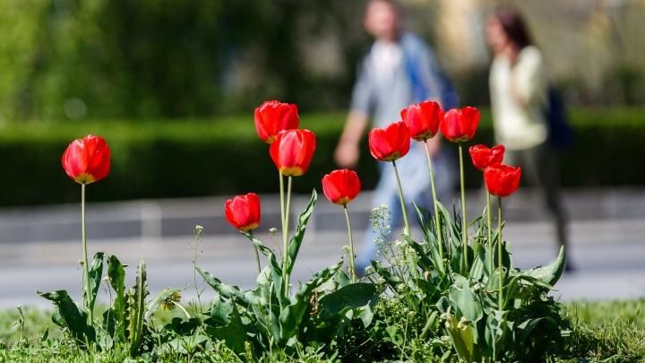 В Волгоградской области на Пасху обещают грозовой дождь и жарудо +27º