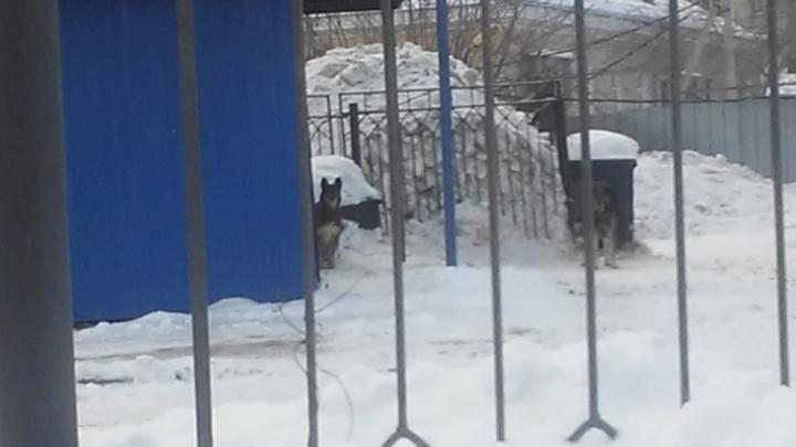 После нападения собак на девочку в Екатеринбурге коммунальщиков решили наказать за халатность
