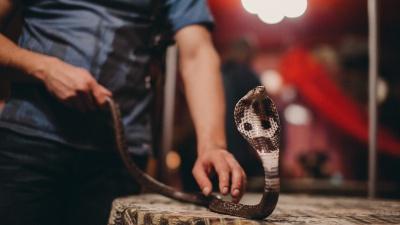 Я встретил змею. Что делать? Она укусит? А яд смертелен? 5 простых правил, которые спасут вам жизнь