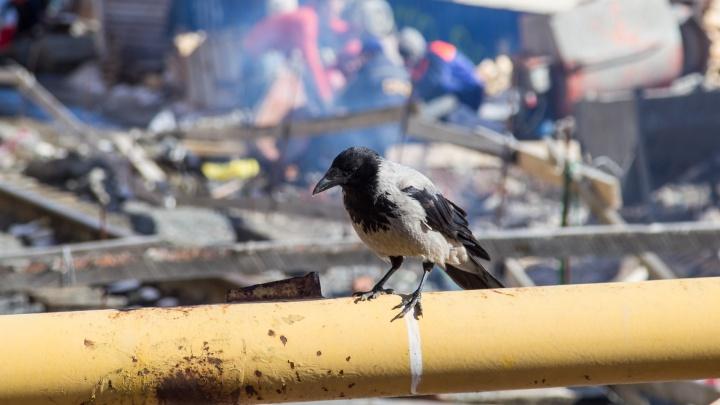 В Соломбале хулиганы взломали вольер, в котором центр «Мата-Мата» выхаживал птиц