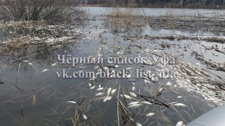 Под Уфой массово гибнет рыба