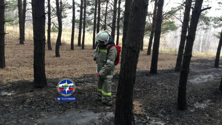 В Октябрьском районе загорелся лес: на месте работали спасатели