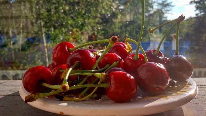 Ларёк, палатка или супермаркет: где в Ярославле дешевле купить черешню