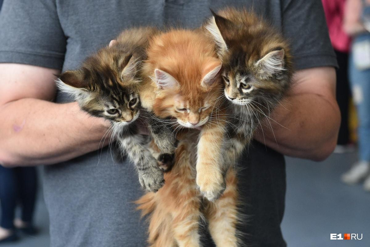 Букет из котиков с выставки кошек. На ней в этом году собралось больше 170 пушистых и лысых милах