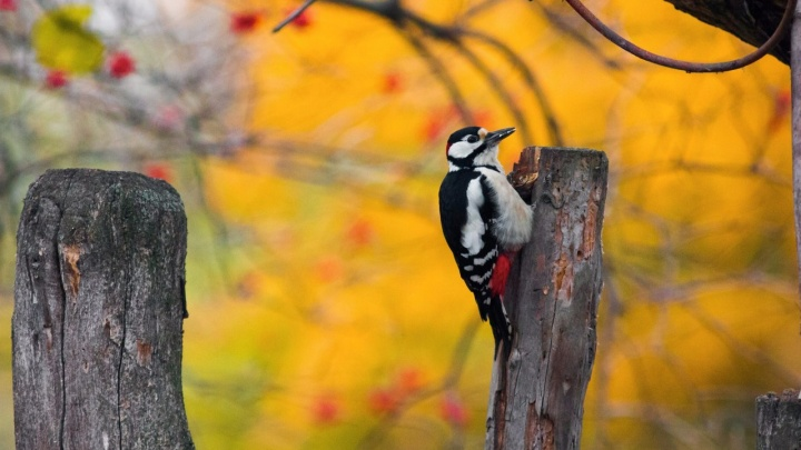 Лиса-летяга, совы-супруги и яркий зимородок на фото студентки из Волгограда