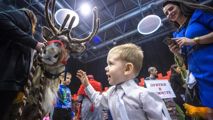 Бесплатное мороженое и волшебный спектакль: стало известно, что увидят дети на «Главной Елке Сибири»
