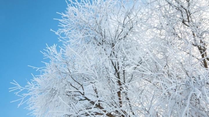 В Самарской области захватили 20 лесных участков