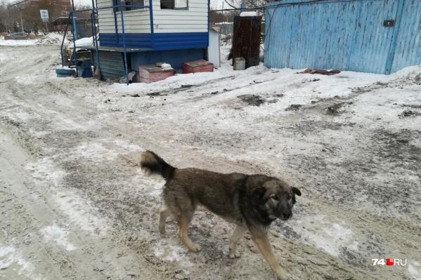 Эта собака 21 февраля покусала ребёнка