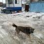 «Набросилась на дочку и покусала»: в Челябинске бродячая собака напала на школьницу