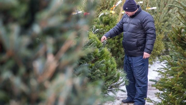 В Волгограде собирают «коробки» елочных базаров: где купить новогоднюю красотку — 2019