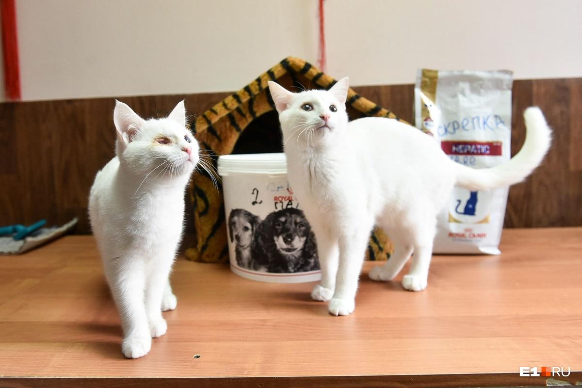 Если у вас два кота, то для комфортной жизни им нужно минимум три лотка