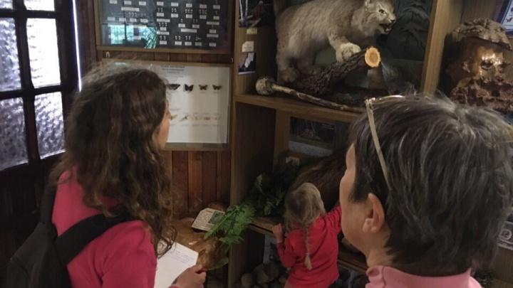 «Не исключаем поджог»: в национальном парке «Таганай» на Южном Урале сгорел Музей природы