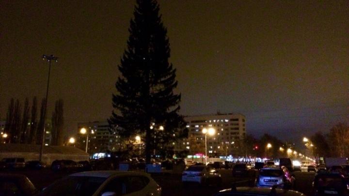 Напротив уфимского Дворца спорта поставили 30-метровую ель