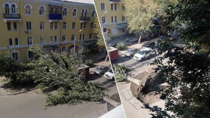 Вырвало с корнем: на улице Строителей рухнуло огромное дерево