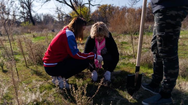 «Раньше мы бы не поверили в эти цифры»: волгоградцы высадили дубраву из четырех тысяч деревьев