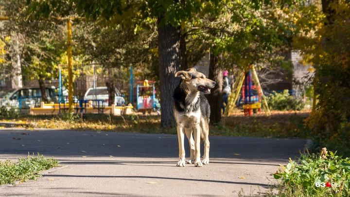 В Самарской области хотят ввести штраф за выгул домашних животных