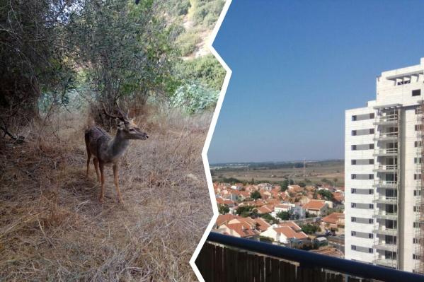 Несмотря на то что Израиль — очень небольшая страна, здесь много красивых мест, которые можно посетить