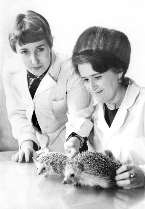 Галина Ивановна Зюсько и Вера Арсениевна Зацепина с ежами, фото 1982 года