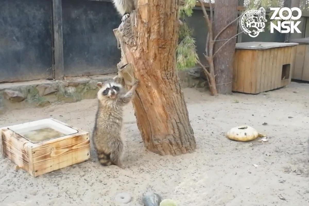 Серия показательных кормлений в зоопарке проходит уже несколько месяцев