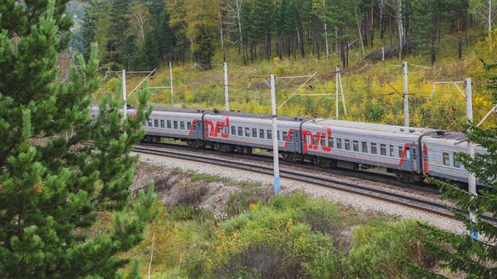Поезд раздавил оставленное без присмотра стадо из 17 овец