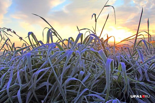 Растения могут погибнуть из-за заморозков
