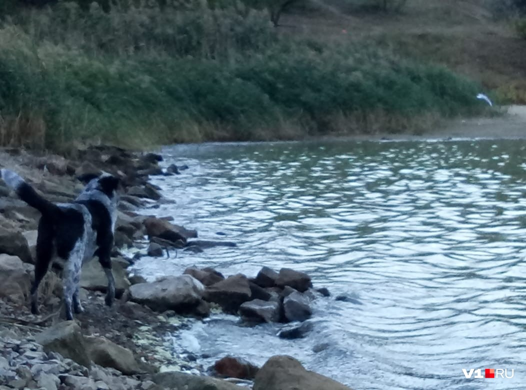 «Собака в воду не полезла»