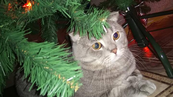 Хвостатое чудо под елкой: любуемся милыми питомцами, которые уже готовы к празднику