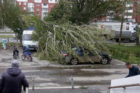 Это дерево упало на Куфонина