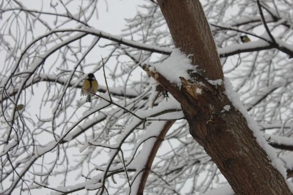Поначалу снегопады будут слабыми, но к пятнице их интенсивность возрастет