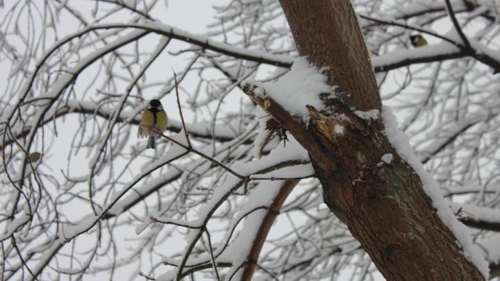 Снег возвращается: в Новосибирск придут снегопады