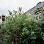 Разбитые окна, заросший плац и шлем танкиста: смотрим, что стало с легендарным училищем в Челябинске
