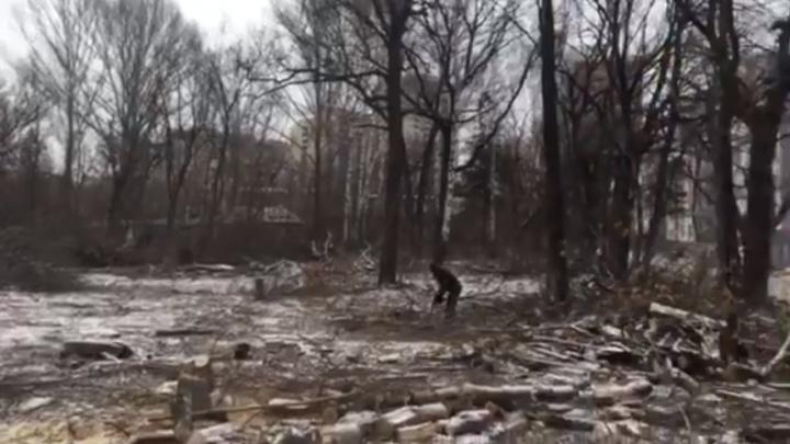 Власти Самары объяснили, зачем на 5-й Просеке начали вырубать деревья