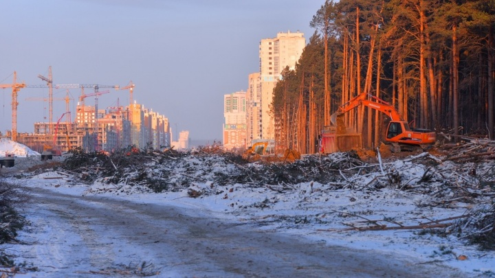 В Академическом сквозь лес «прорубили» проспект Сахарова — техника дошла до Амундсена