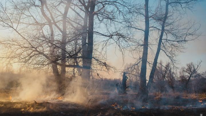 В Самарской области ввели запрет на охоту
