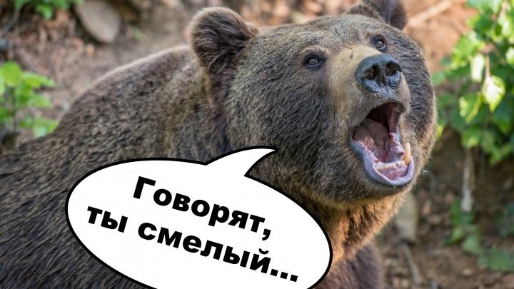 Лучшее за год: Подставь бочок - есть ли у вас шансы победить медведя