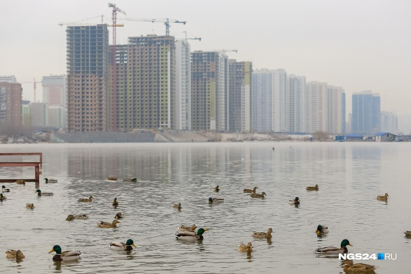 До 2021 года в Красноярске пообещали очистить Абаканскую протоку