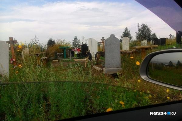 В мэрии говорят, что проблема с собаками существует на всех городских кладбищах