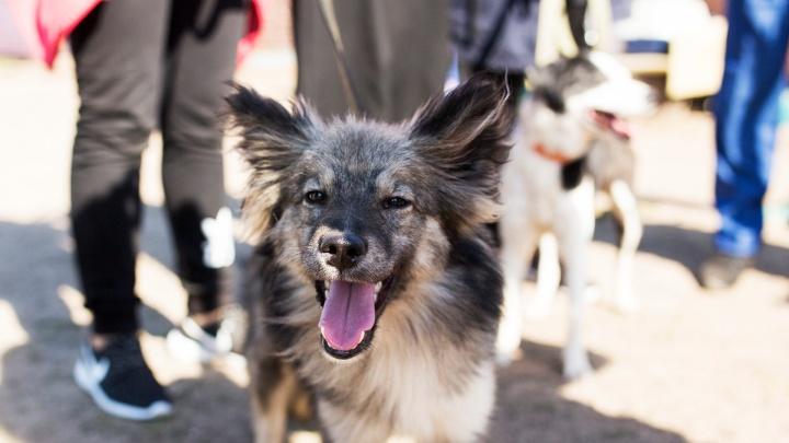 Специалисты назвали самых популярных в Ярославле собак: топ-5 пород