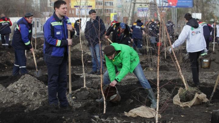 В микрорайоне «Северный» появился новый сквер на три сотни деревьев