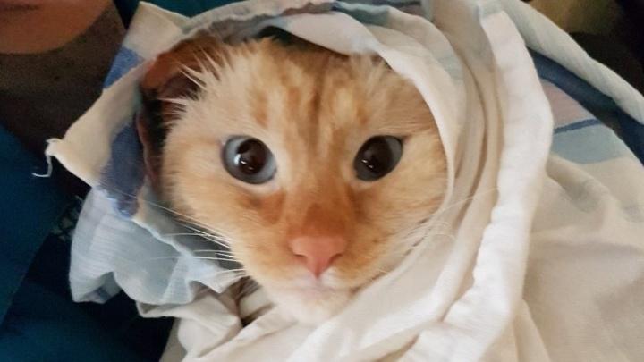 Прыгали, топали, мяукали: на ЖБИ прошёл флешмоб с участием 30 котов