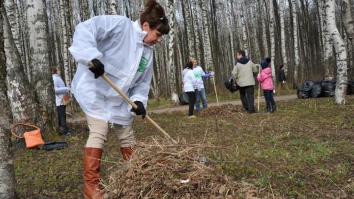 «Я не мусорю, не мне и убирать»: ярославцы отказываются бесплатно выходить на субботник