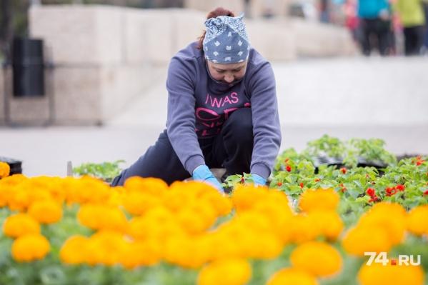Раньше других цветы высадили в Центральном районе