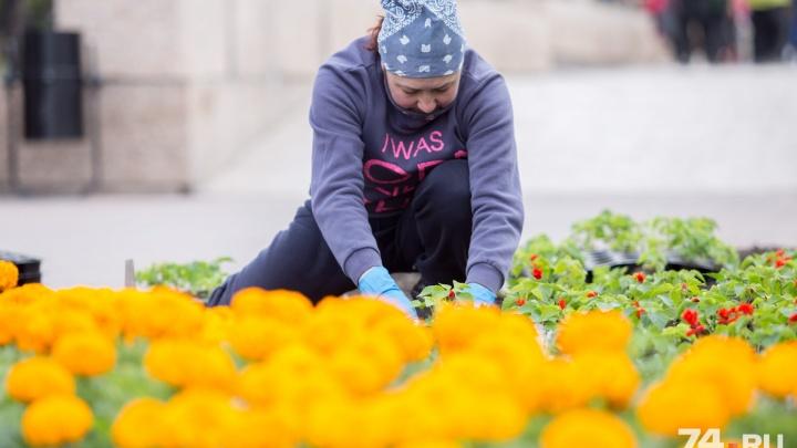 «Цветы высадили, получилось достойно»: в Челябинске закончили оформление клумб и вазонов