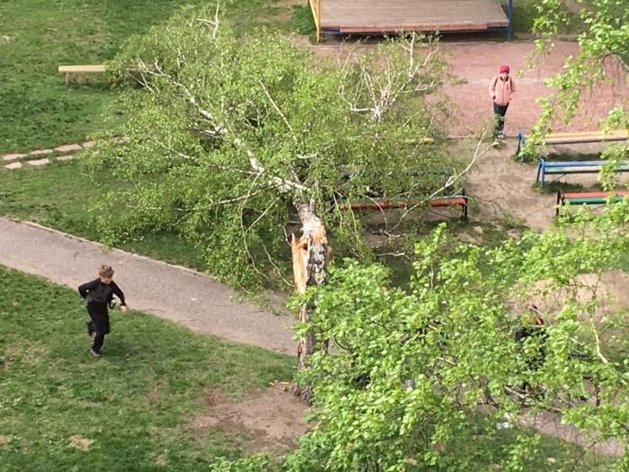 Дерево упало рядом с играющими детьми